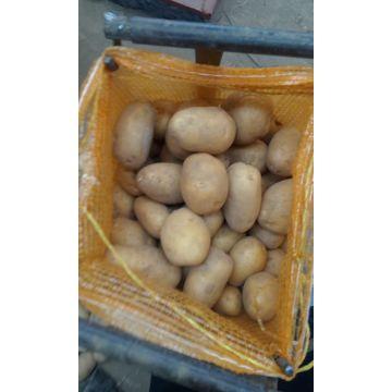 2016 Новый Урожай Свежего Картофеля Шаньдун