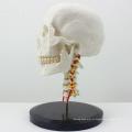 SKULL06 (12332) Пластиковые анатомические череп модель с шейного отдела позвоночника
