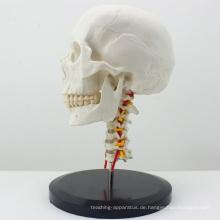 SKULL06 (12332) Anatomischer Plastikschädel mit Cervical Spine Model