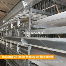 Equipo de pollos de engorde automático de tipo H para la producción de carne