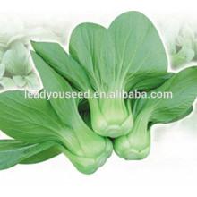 MPK08 XG graines courtes de pakchoi hybride de plante f1 en ventes