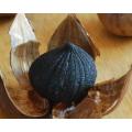 black garlic single solo clove black garlic