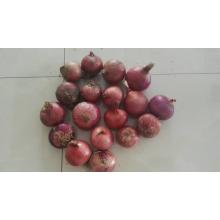 Tonos de ajo fresco y cebolla fresca