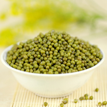 Agricultural crop green mung bean with lower price