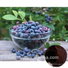 Hohe Qualität 100% natürliche Heidelbeere Extrakt 4: 1 Anthocyanidin 25%