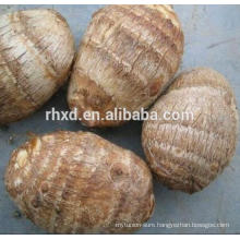Chinese fresh taro with good quality