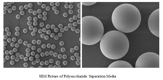 Polysaccharide  Separation Media