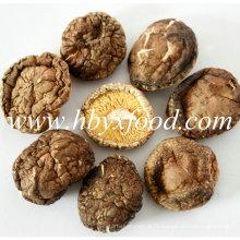 100% naturel sans pollution, poussiéreux 4-5cm Smooth Shiitake Mushroom