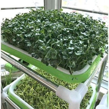 seedling tray for hydroponic vegetable