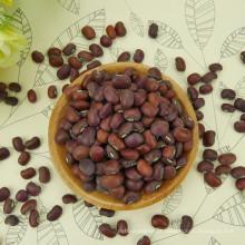 caupi 2016 colheita de alta qualidade venda quente caupi vermelho