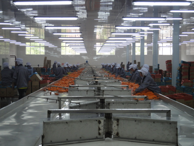 Processing line-2