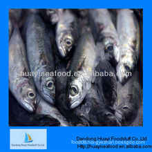 good quality frozen fish sardine