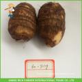 Chinese Fresh Taro 60g Size To USA