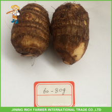 Chinese Fresh Taro 60g Size To USA