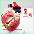 А06(12008) сердце модель собаки,анатомические модели животных для справки ветеринара 12008