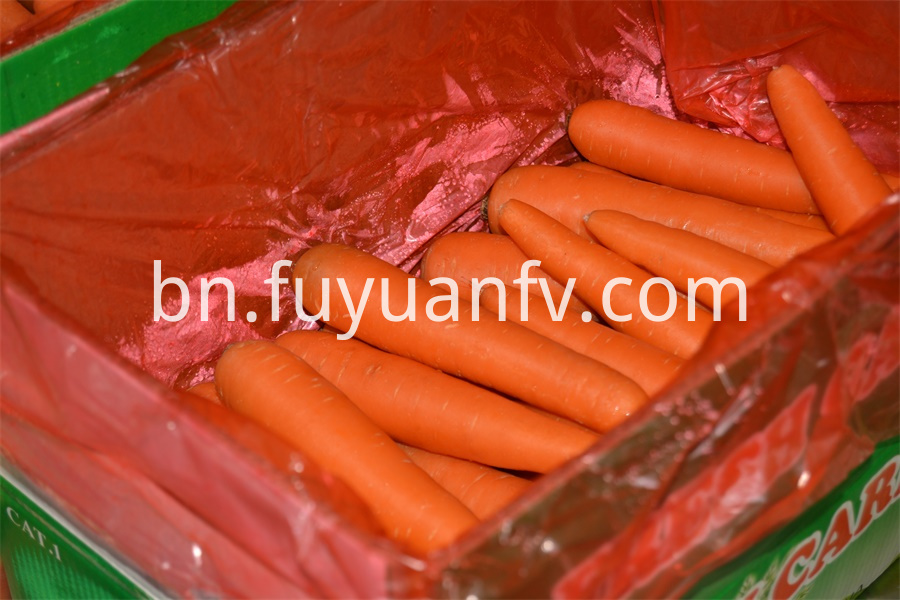 Anqiu Fresh Carrot