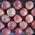 Qualité supérieure de pomme Qinguan fraîche