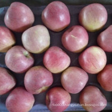 Top Quality of Fresh Qinguan Apple
