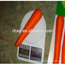 China export fresh carrot by professional carrot exporter