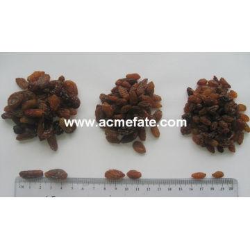 Raisins ensemencés de qualité supérieure en gros (dorés, verts, sultanes, séchés au soleil)
