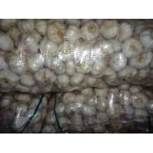 Export Normal White Garlic