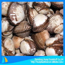 Frozen blood clam meat