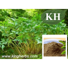 High Natural Ratio Extract Coptis Chinensis Extract