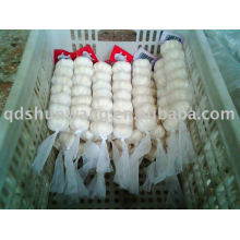 fresh jinxiang pure white garlic