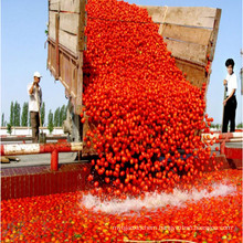 70g to 4500g Red Tomato Paste