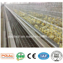Pullet Cage Small Chick Cages