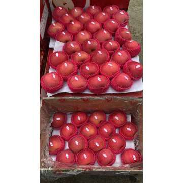 Fresh Fruits Red FUJI Apples Delicious Apples