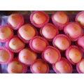 FUJI Apple Apple dulce