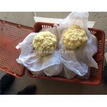 coliflor fresca al por mayor con alta calidad de China