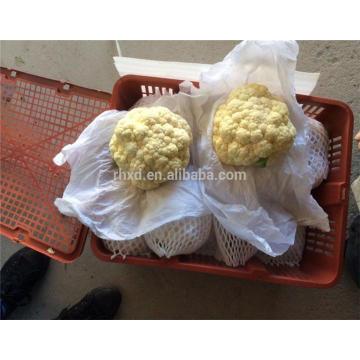 New bulk hybrid cauliflower seeds for wholesales