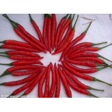 Neue Ernte Top-Qualität für den Verkauf Red Hot Chili
