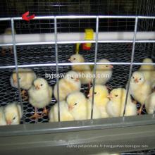 Bonnes cages de poussin de conception de poussin à vendre