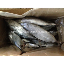 IQF Bonito Fish (700g+)