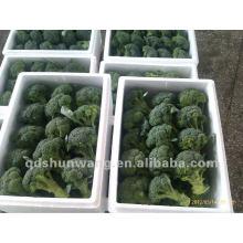 fresh broccoli 2015