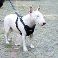 Cinto de segurança profissional do carro do cão de estimação do nylon do conforto com a correia refletindo do cão da segurança do chicote de fios