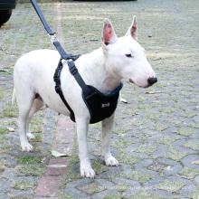 Hareness do animal de estimação do veículo do curso do chicote de fios do cão da veste da segurança do carro de luxe com cinto de segurança