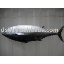 Замороженный тунца