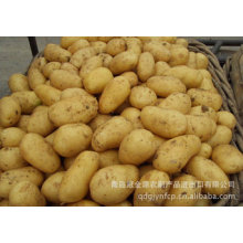 Patata fresca de nueva cosecha de calidad superior (150 g en adelante)