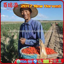 Hand, die getrocknete Früchte Ningxia wolfberry goji Beerenbonbons auswählt