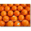 Baby Mandarin Orange