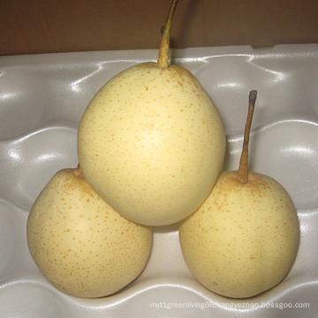 Fresh New Crop Yellow Ya Pear