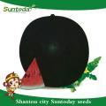 Suntoday altas vezes para venda balck rodada híbrido vegetal F1 comprar heriloom on-line plantador sudão Sementes orgânicas da melancia (11005)
