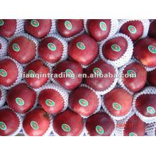2012 fresh huaniu apple exporter