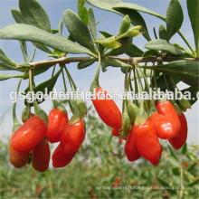 2017 nouvelle récolte de fruits séchés gojiberry