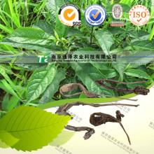 100% Pure Natural Herb Medicine Folium Isatidis Da Qing Ye