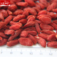 New harvest fruit goji berry wholeseller